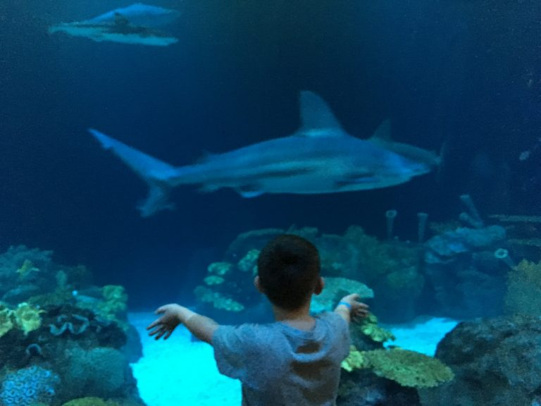 boy and shark