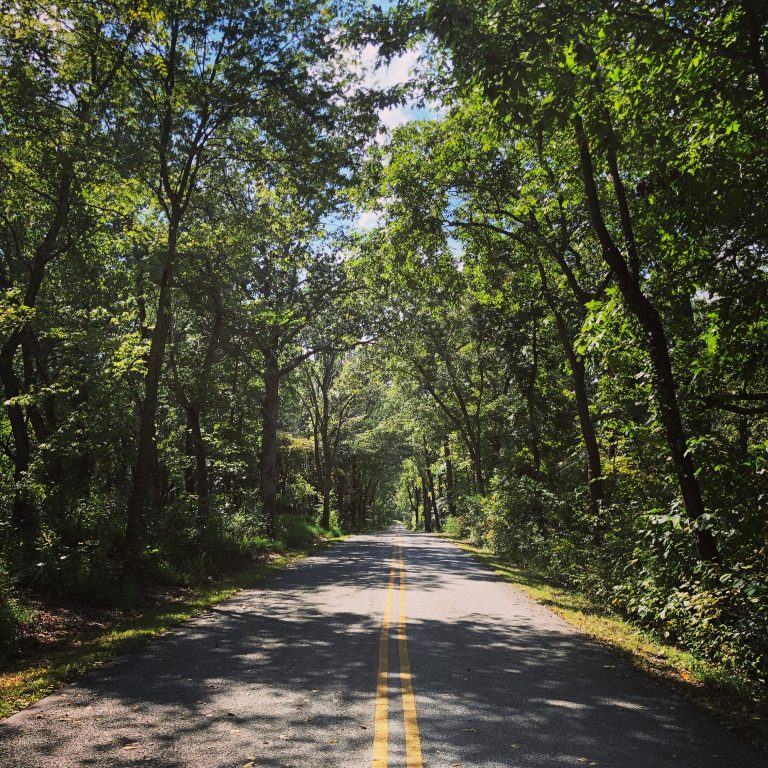 tree lined paved road at pea ridge national military park