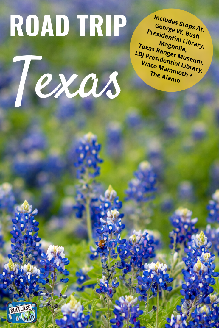 field of blue bonnets in Texas
