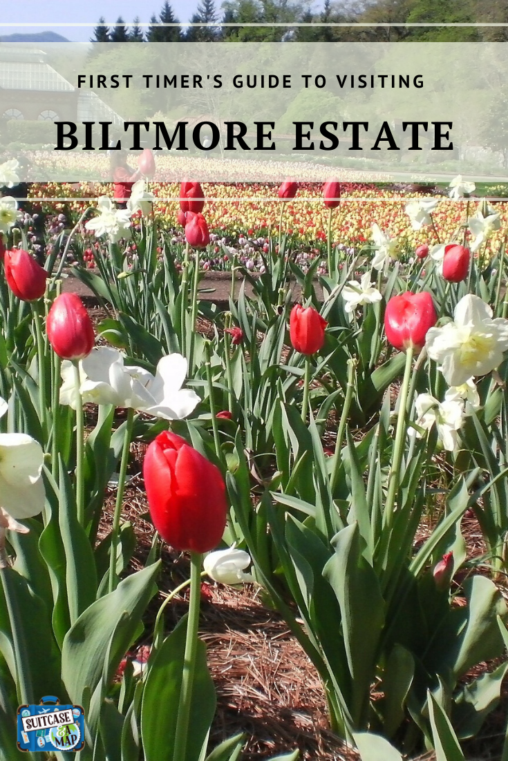 red and white tulips in Biltmore Estate garden